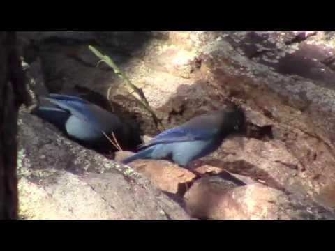Great bird day at Goldwater Lake, Prescott, AZ