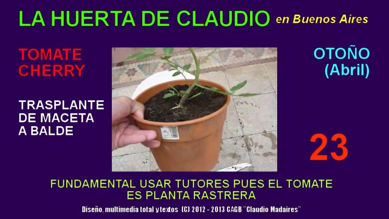 Cultivar tomates cherry en casa trasplante de maceta a balde youtube - Tomates cherry en maceta ...