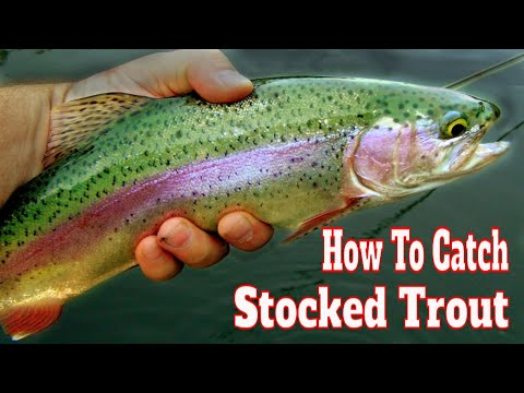 Stock 15 Mocca Fishing Spinning Trout Lake Stream River do it Marbled