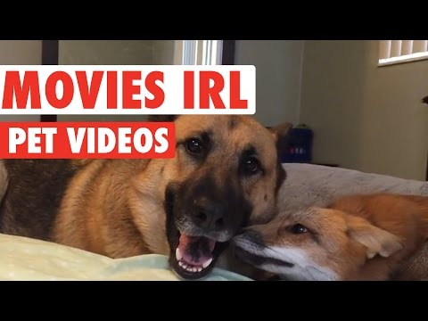 Funny Pet Movies IRL Compilation