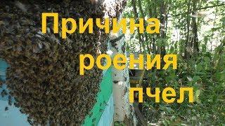 Одна из причин частого роения пчел