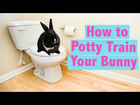 how-to-potty-train-your-rabbit