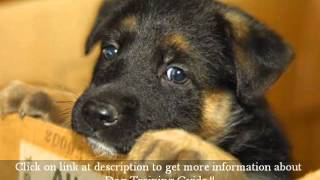 German Shepherd Training Tips- Some Practical German Shepherd Puppy Training Tips