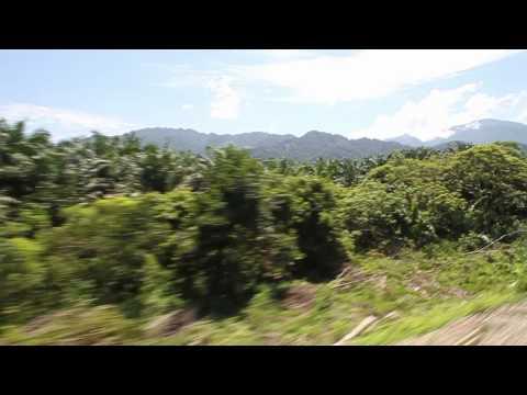 Jungle Railway Malaysia