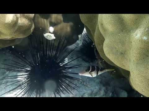 Tanzania snorkeling Zanzibar Matemwe / Tansania schnorcheln Sansibar