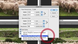 How To Resize Images In Photoshop Without Losing Quality