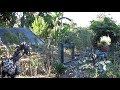 Abundant Chicken Coop Garden Provides On Demand Food, Shade & Shelter From Predators