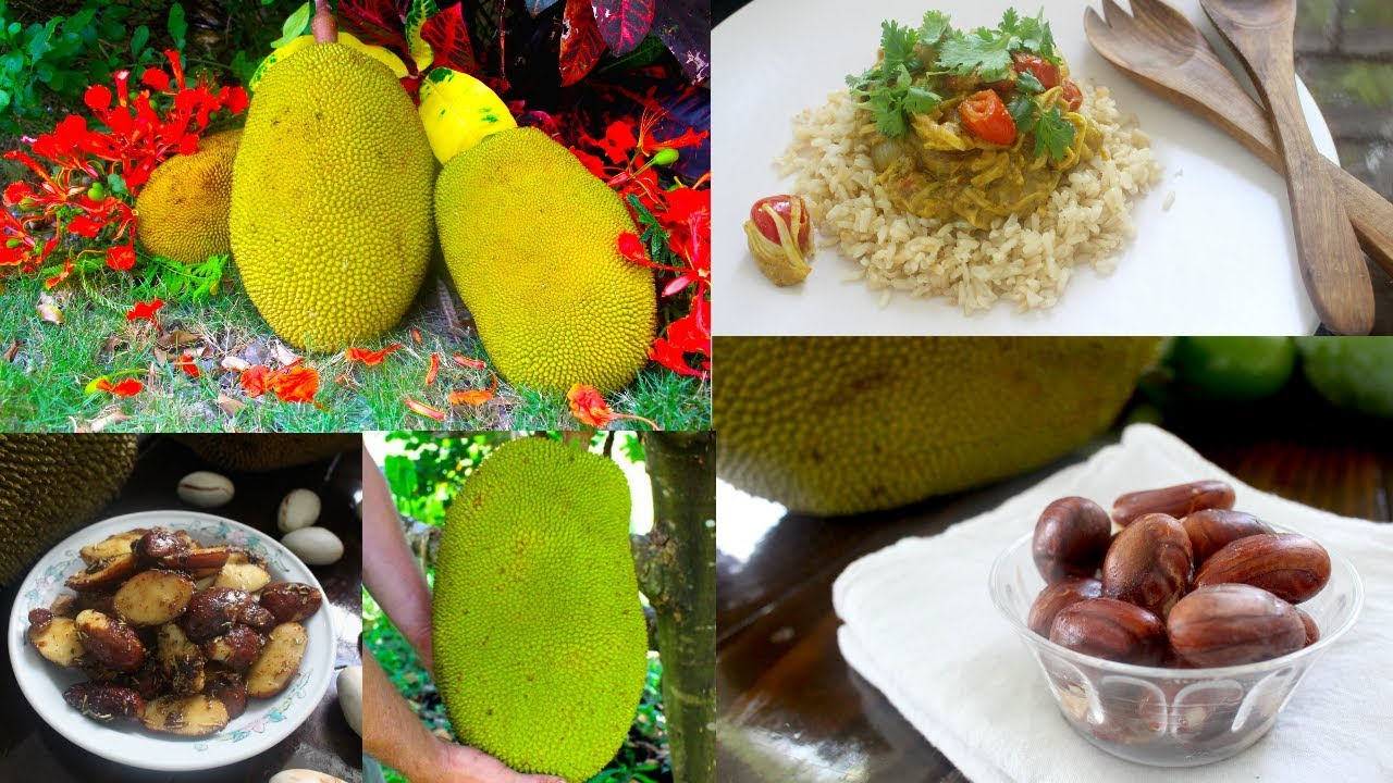 Jackfruit Seeds & Curry Recipe - How to Cook and Eat ...