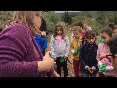 Les CE2 préparent l'hivernage du potager
