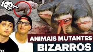 OS ANIMAIS MUTANTES MAIS BIZARROS DO MUNDO