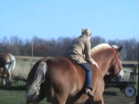 Beautiful Girl Live Wallpaper Hd Katie Callander S Horse Ride Youtube