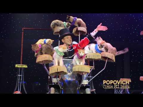 Popovich Comedy Pet Theater Promo - Concord NH -  Nov 10 2017