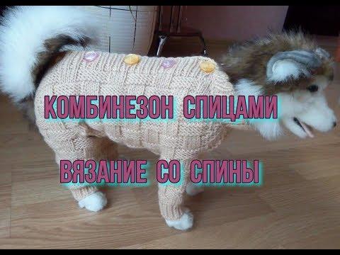 Вязаный спицами комбинезон для собаки схема