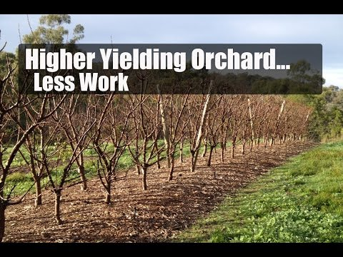 Higher Yielding Orchard, Less Work