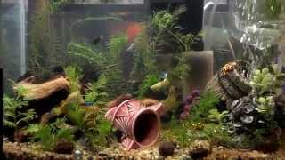 my 10 gallon community fish tank