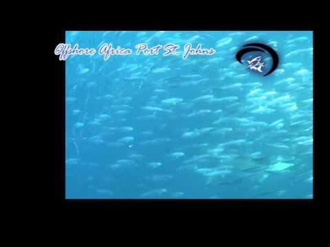 Shark n Baitball by Offshore Africa