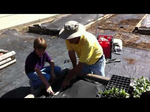 Learning How To Plant Vegetables In The Garden