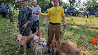Выставка охотничьих собак г.Белёв , Тульская обл.