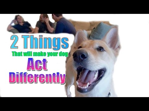 The 2 BIGGEST Things That Will Make Your Dog Act Differently