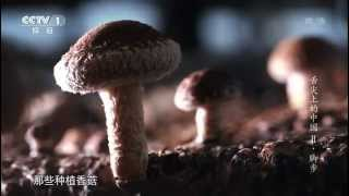 A Bite of China Season 2 Ep1: Footsteps (English subtitles / caption)