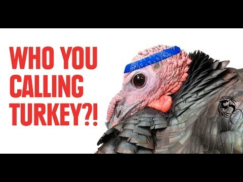 Facts That Prove Turkeys Are Badass