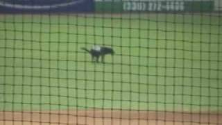 Greensboro Grasshoppers - Miss Babe Ruth