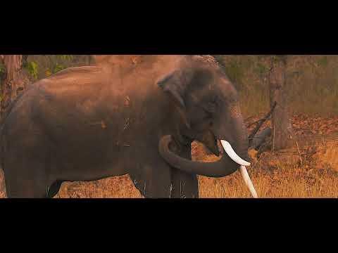 Wild Madhya Pradesh