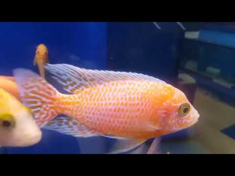 Kangen Fish Aquatics March fish stocks