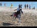 Atlı Cirit müsabakaları Alanya'da başladı