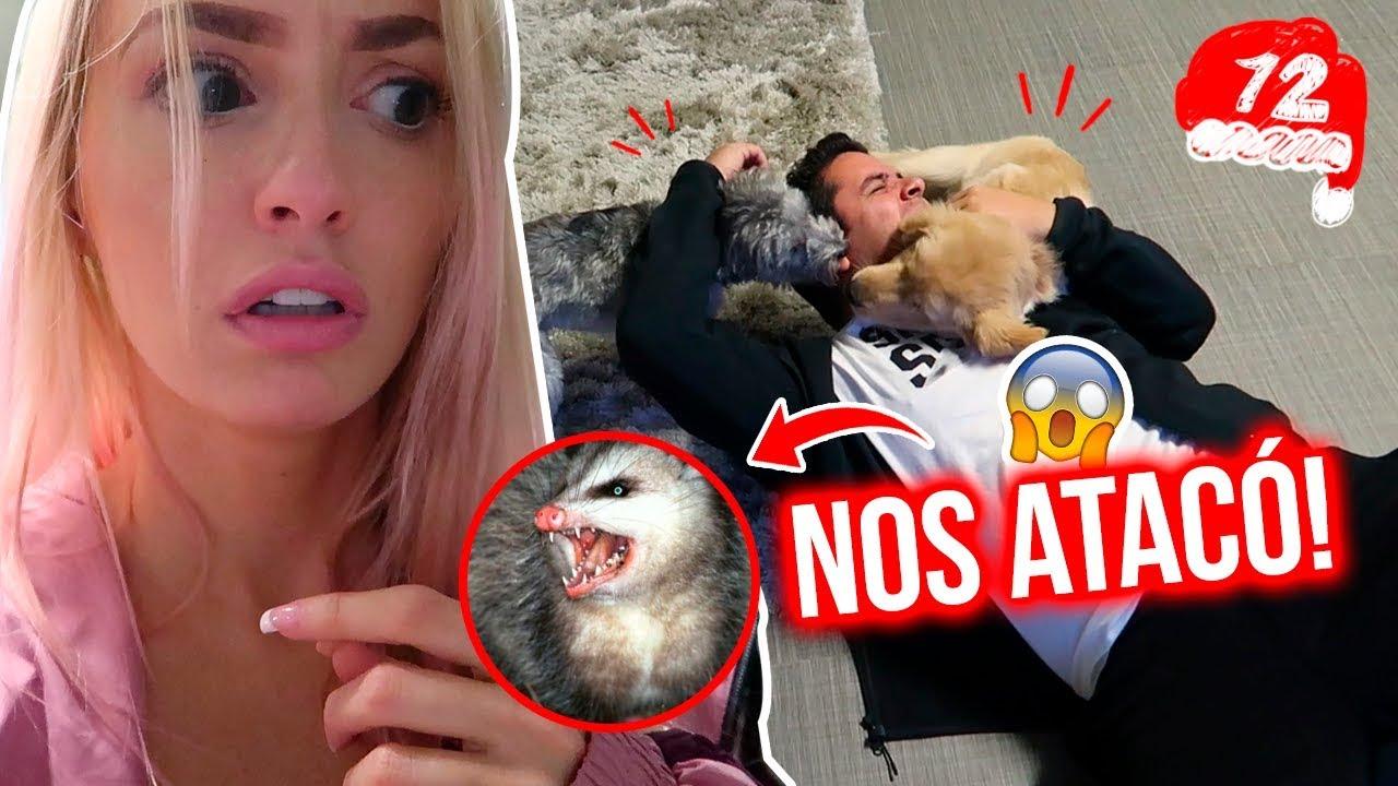 UN ANIMAL SALVAJE ENTRÓ A MI CASA Y NOS ATACÓ! 😱💔VLOGMAS  #12  #Trend