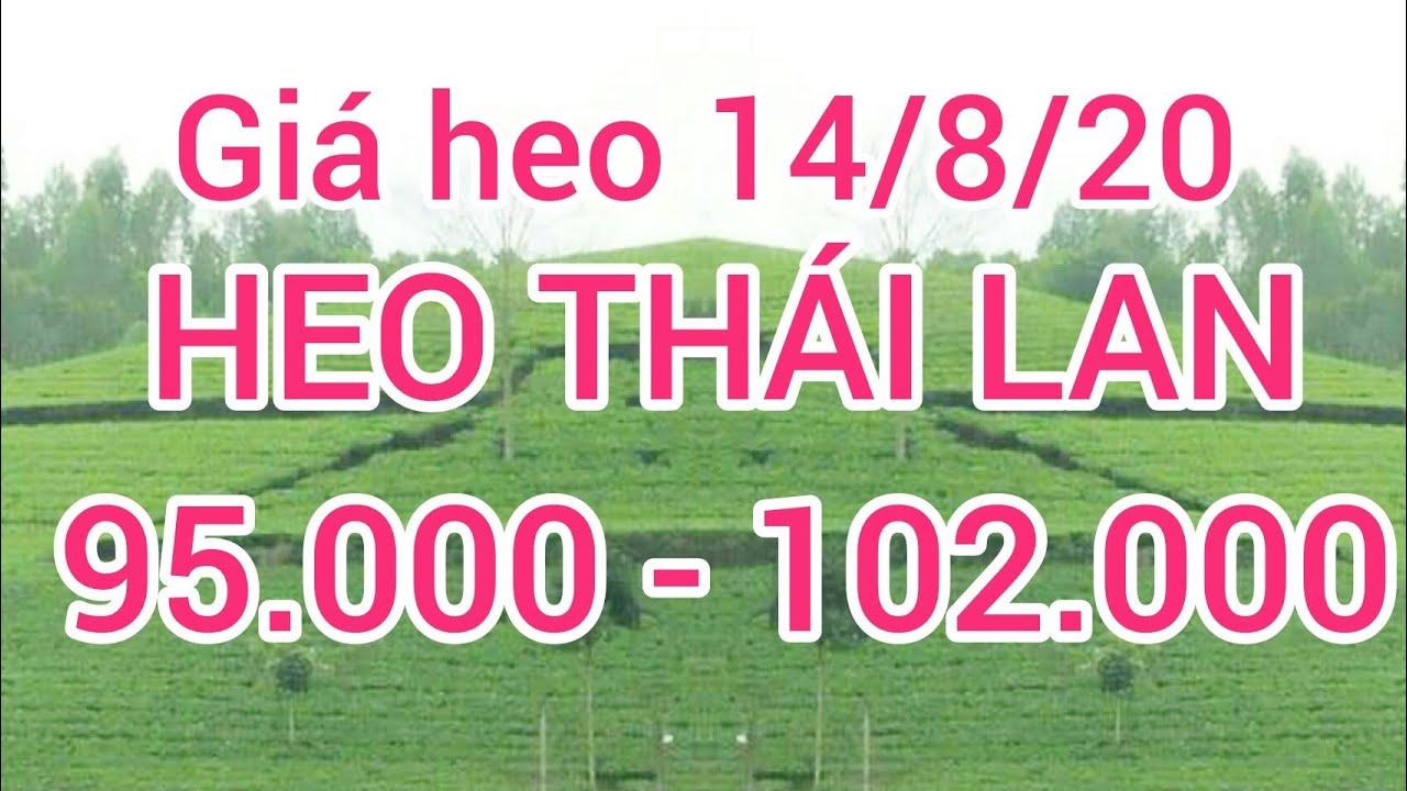 Giá heo ngày 14 tháng 8 năm 2020. giá thịt lợn thái lan 95000 đến 102000 đồng/kg cao hơn VIỆT NAM ?