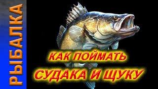 Ловим Щуку и Судака Рыбалка на реке Обь