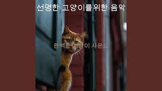 미묘한 고양이 훈련 분…