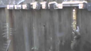 Birdfeeder Squirrel Challenge