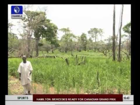 Understanding Nigeria's Rice Revolution