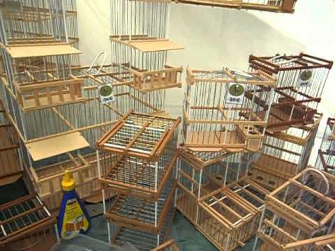 Jaulas artesanales de madera para pajaros youtube for Jaulas para cria de peces