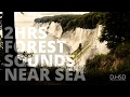 2 Hrs Forest Sounds Near Sea