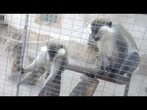 Смешные и забавные обезьяны / Маленькая обезьянка / Кормим обезьян / Одесский зоопарк / Odessa ZOO.