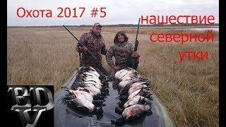 Охота 2017 #5 (Нашествие северной утки)