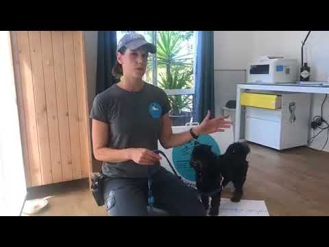 how-to-teach-your-dog-not-to-bark-at-the-door---ask-a-dog-trainer-with-mali-luty