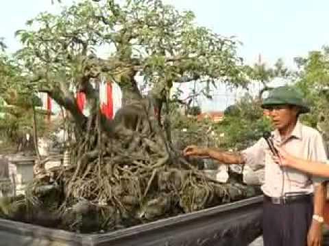 Triển lãm cây cảnh Xuân Trường - Nam Định  tuandidongxt@gmail.com  phan1 .flv