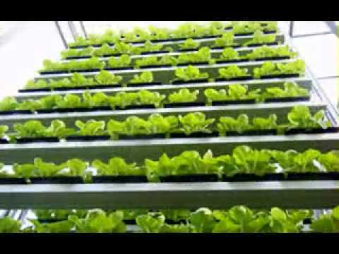 Vertical Farming Systems Design Youtube