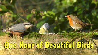Beautiful Birds Singing & Chirping in The Forest - Bird Song & Nature Sounds