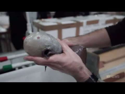 Deep Sea Faceless Fish Discovered In The Abyss