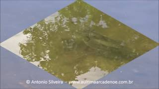 fish watching in oleta river state park miami 22 6 2017 antonio silveira