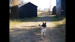 I Gave Hundreds of Tours through Michael Vick's Dogfighting Sheds. He Deserves No Pro-Bowl Honor