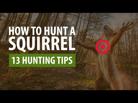 How To Hunt A Squirrel - 13 Hunting Tips