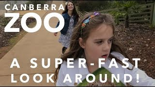 Canberra Zoo tour - a super-fast look around!