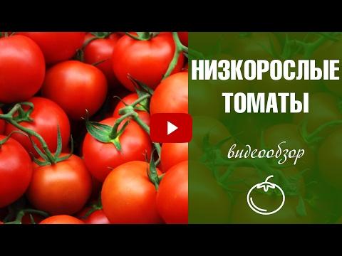 Сорта томатов для теплиц 🍅  Среднерослые томаты