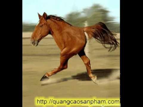 Ngựa đua